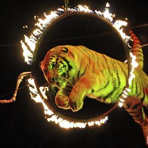 Цирки Одинцово