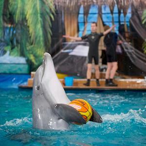 Дельфинарии, океанариумы Одинцово