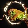 Цирки в Одинцово