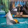Дельфинарии, океанариумы в Одинцово